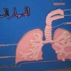 جهاز التنفس في الإنسان